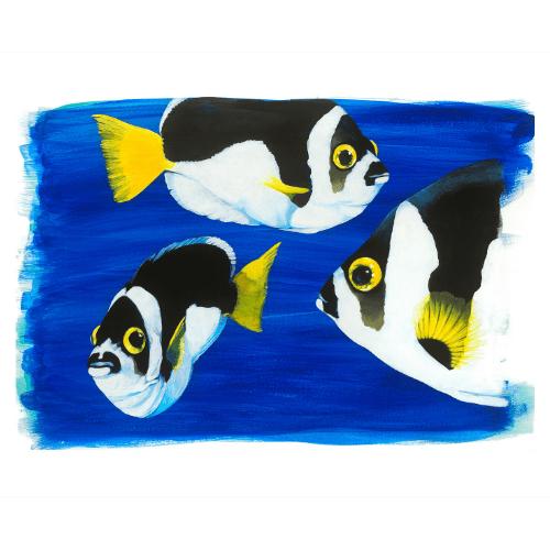 Ballina Angelfish Lord Howe Island Margaret Murray Art