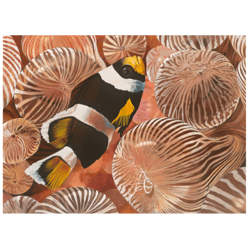 mccullough's anemone Lord Howe Island Margaret Murray Art